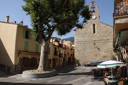 Le platane sur la place de la République à Laroque des Albères, Pyrénées Orientales