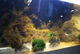 Le nouvel aquarium de banyuls sur mer - Office du tourisme banyuls sur mer ...